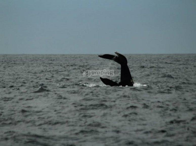 tours de ballena