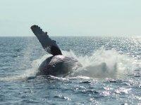 Tour whale watching para niños Vallarta medio día