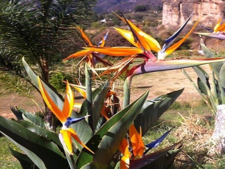 naturaleza en mallikualli