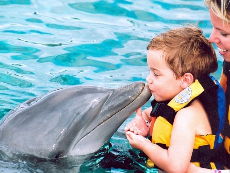 dolphin kisses