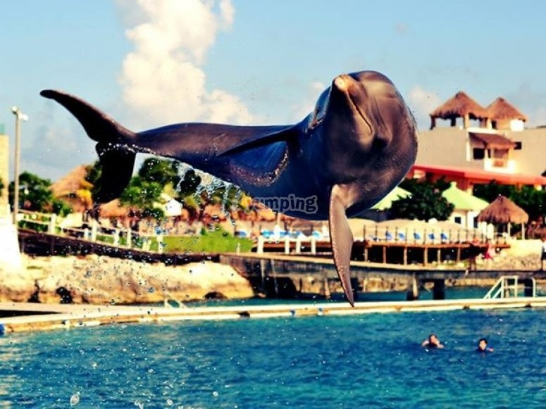 Dolphins in Riviera Maya