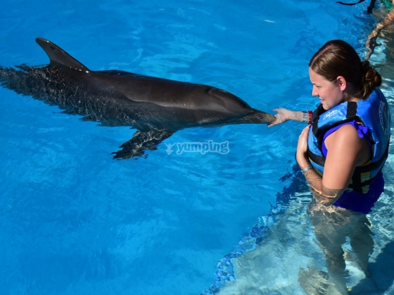 greeting the dolphin