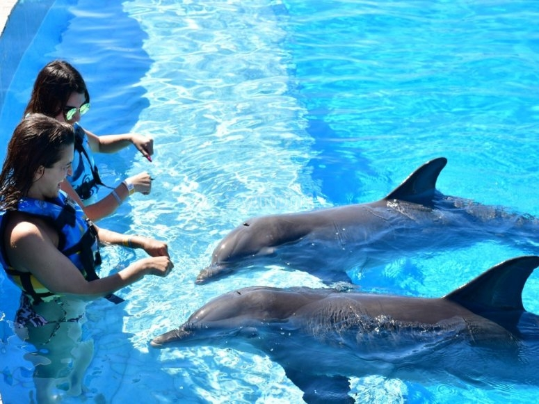 girls interacting with dolphins
