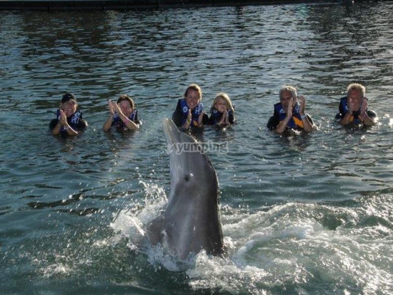 delfines en los cabos