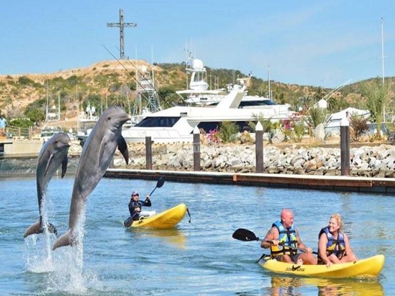 kayaks y delfines