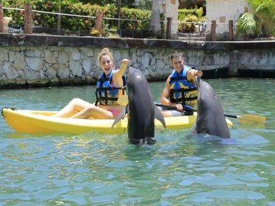 Nado con delfines y kayaks en Los Cabos 65 min