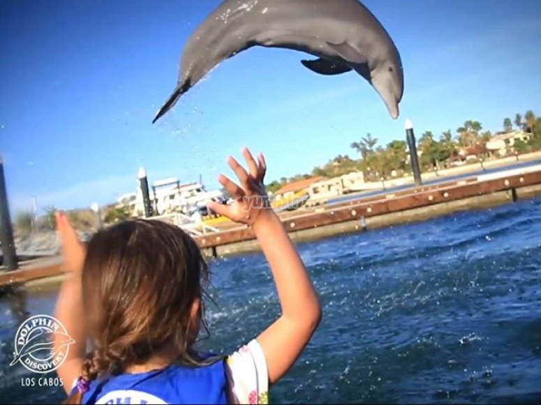 ilusion en dolphin discovery