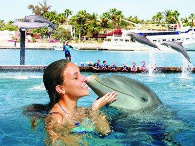 Encuentro y nado con delfines 30 min en Los Cabos
