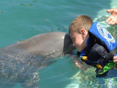Programa encuentro con delfines niños Los Cabos