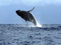 Tour de whale watching