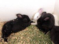 Pet the bunnies