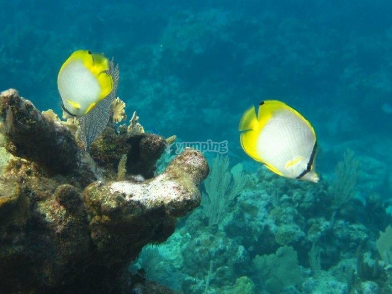 maravillas marinas