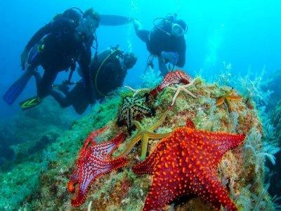 PADI Scuba Diver course. 2 days. Islas Loreto.