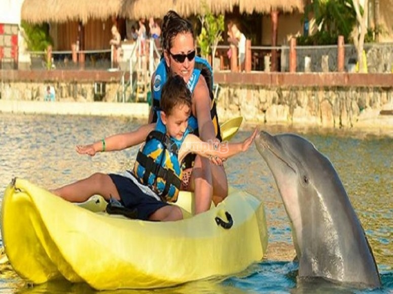 Dolphins with kids