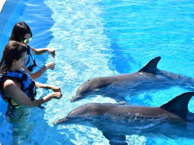 Dolphinarium for children