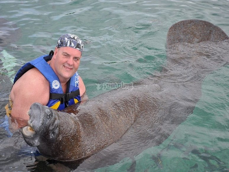 Meeting with manatees