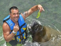Manatees experience 30 minutes in Cozumel