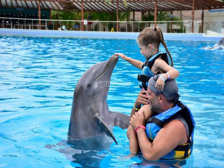 Caressing the dolphin