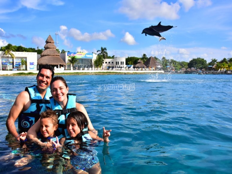 Family swimming with dolphins