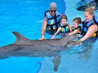 Dolphins with the family