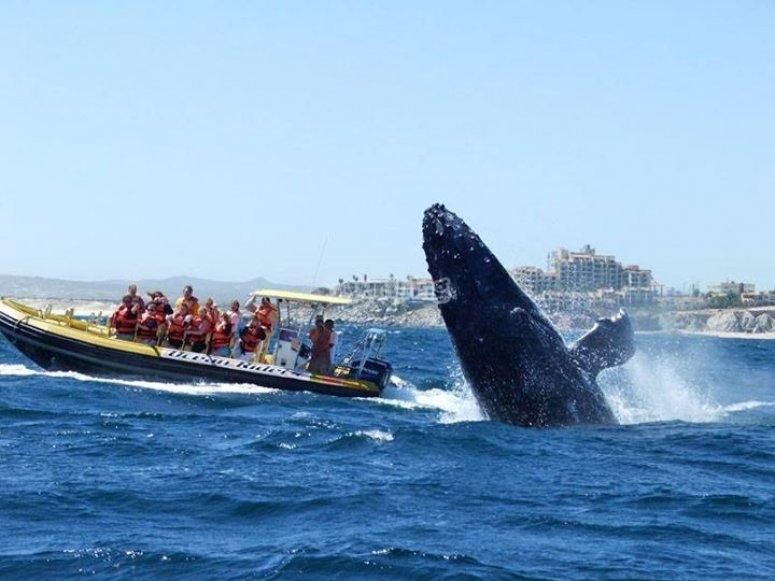avistamiento ballenas