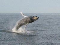 Tour de whale watching para niños en Los Cabos