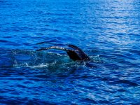 Whale shark sighting