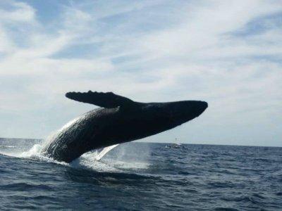 Marina San Blas Ecotours Whale Watching