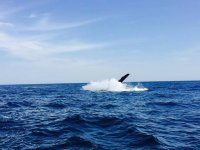 whales in Nayarit