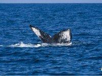 Whale watching in San Blas
