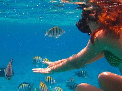 Snorkeling tour  y comida en barco 4h Los Cabos