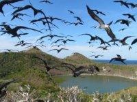 isla y aves