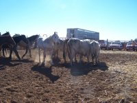 Ranch and horses
