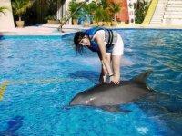 Acrobacia con delfines