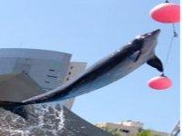 Entrenamiendo de animal marino