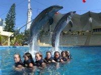 Salto de mamifero marino