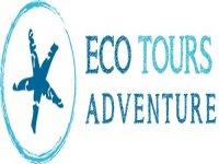 Eco Tours Adventure - Wildlife Encounters in Mexico Nado con Tiburón Ballena