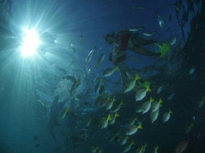 Tour Snorkel en 2 bahías: San Rafaelito y Balandra