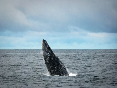 Whale watching tour in Baja California Sur
