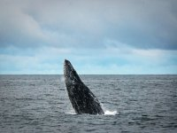 Whale watching tour in Baja California Sur