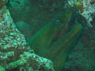 Expedición de buceo nocturno en Los Cabos