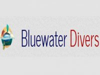 Bluewater Divers  Whale Watching