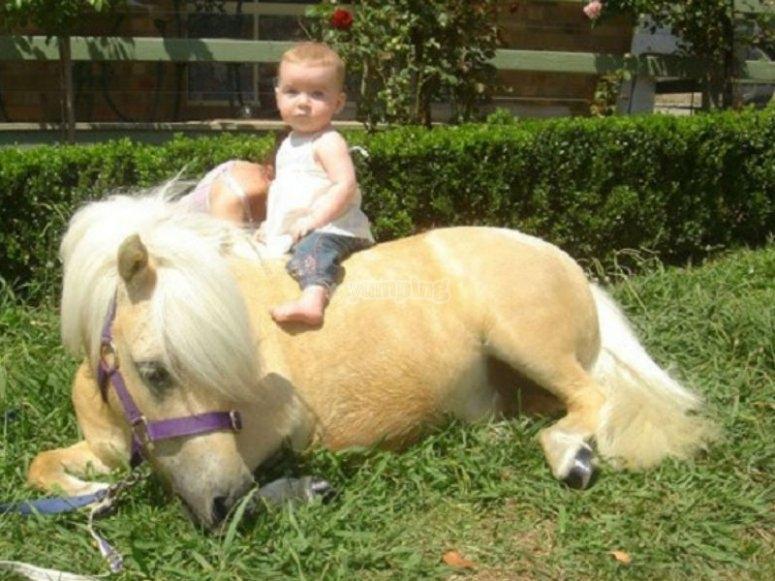 Pequeño montando pony
