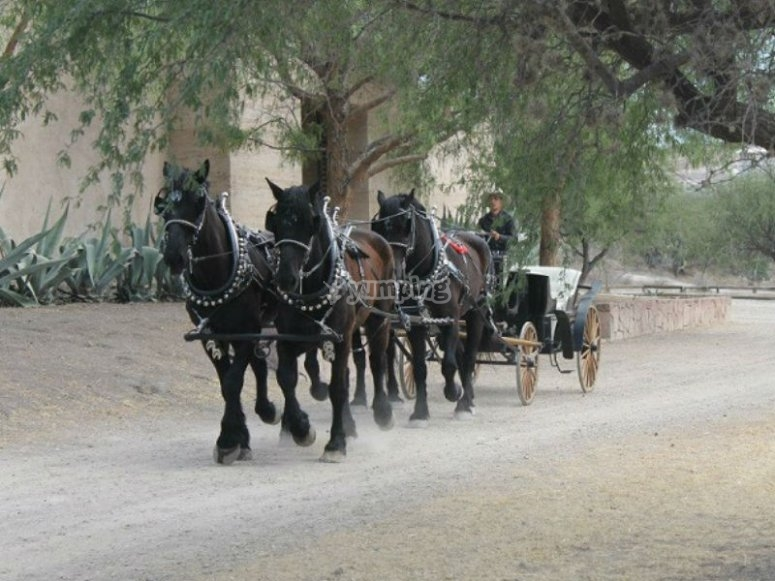 Ideal carriage ride for Valentine's Day