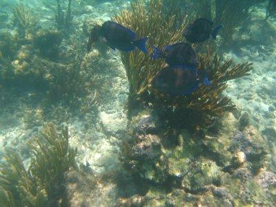 soliman bay tours Snorkel