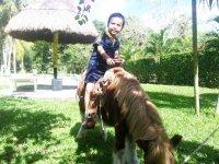 Paseo en pony