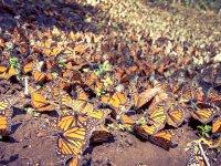 Ciclismo de montaña 35K Santuario Mariposa Monarca