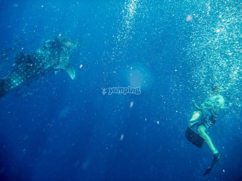 snorkeleando en cancun