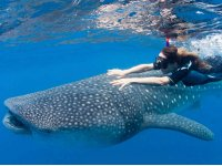 Swimming with whale sharks in Cancún blue water