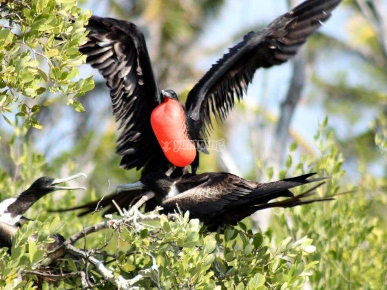 Aves en isla contoy